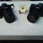 EOS Rebel T7i y la cámara EOS 77D